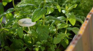 kuebel bepflanzen kraeutergarten anlegen