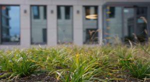 schutzvlies fuer pflanzen - ein muss in jedem garten
