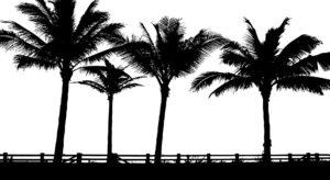 palmen in freien